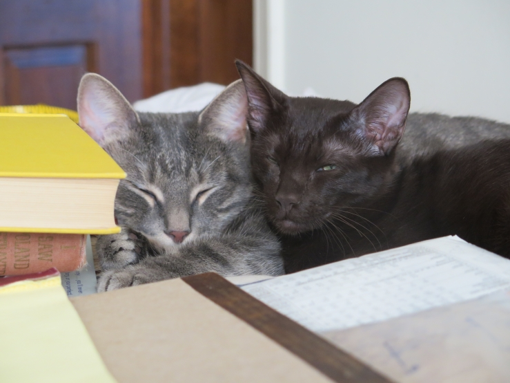 Lilith and Helena, sleeping with my books about post-war pogroms in Poland.